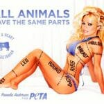 Pamela Anderson displays her parts for PETA
